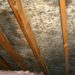 Mold Remediation by Energy Geeks