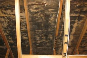 Weatherization helps mold remediation